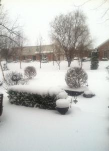 My backyard on March 24, 2013