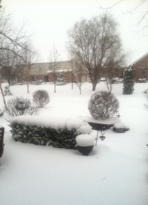 My backyard on March 24, 2013